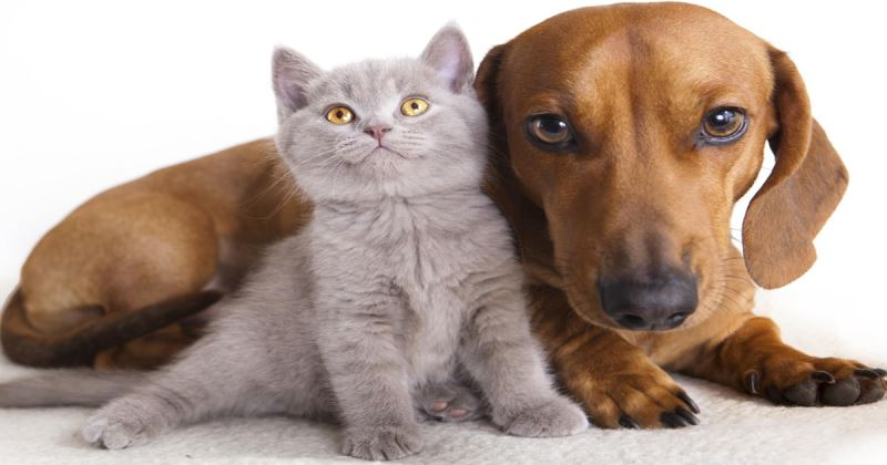 Cani Gatti E Tutti Gli Animali Di Tabook 14 Imperdibili Letture